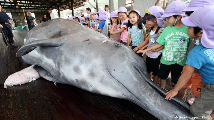 A row of Japanese children wearing lilac hats pet a dead whale that is lying in a hall.