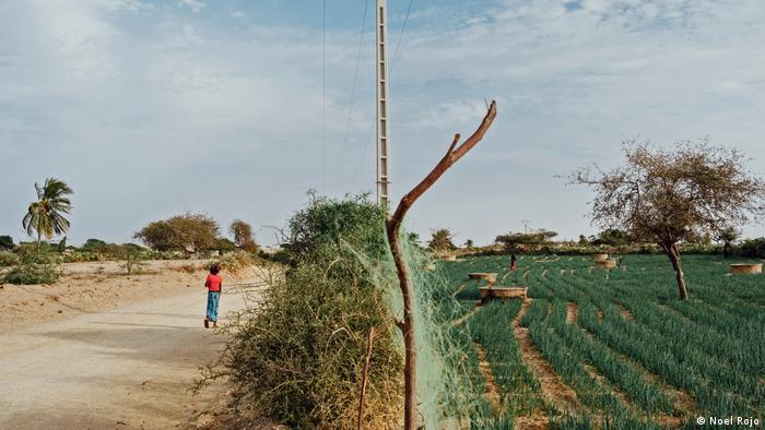 Senegal: Agriculture in the desert