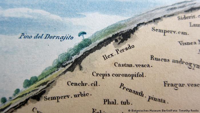 Eine von Alexander von Humboldts botanischen Aufzeichnungen von Tenariffa