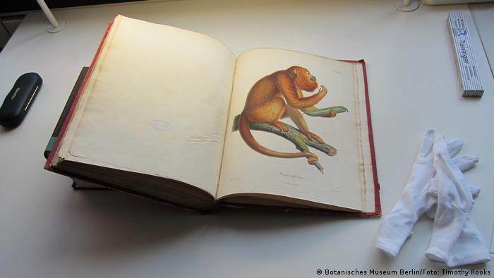 Alexander von Humboldt Buch Aufzeichnungen