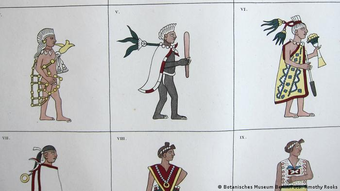Alexander von Humboldts Darstellungen von Kostümen mexikanischer Maler zu Montezumas Zeiten