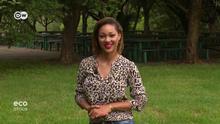 Eco Africa Moderatorin Felicia Endersby