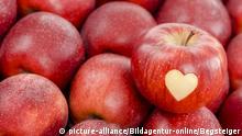 Roter Apfel mit Herz liegt auf roten Äpfeln - red apples with heart | Verwendung weltweit, Keine Weitergabe an Wiederverkäufer.