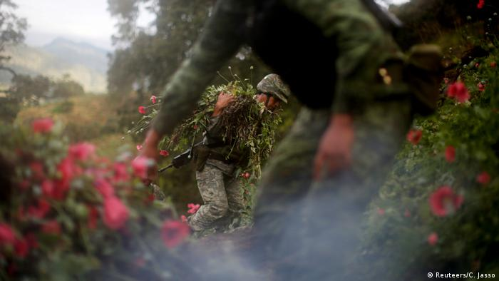 Soldiers destroy opium plantation in Mexico