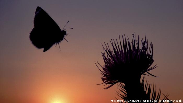 The shadow of a butterfly and a plant are silhouetted against the setting sun (picture-alliance/Arco Images GmbH/F. Rauschenbach)