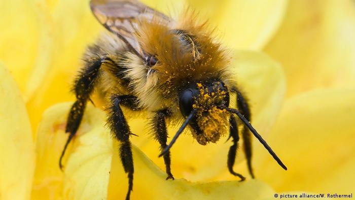 У Червоній книзі чимало видів комах. Хто перевірятиме і як підтверджуватиме відсутність цих видів у кожній ділянці лісу - незрозуміло