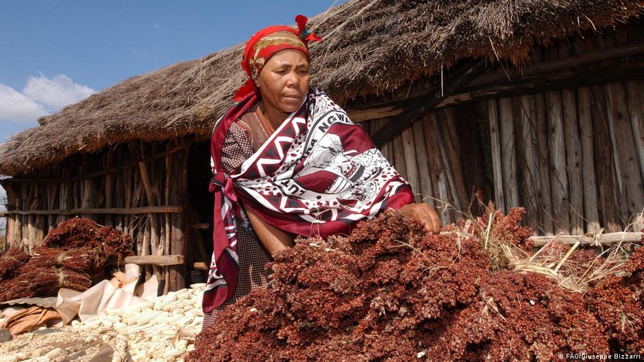 Women custodians of biodiversity hold key to food security ... 3a826b6f739e3
