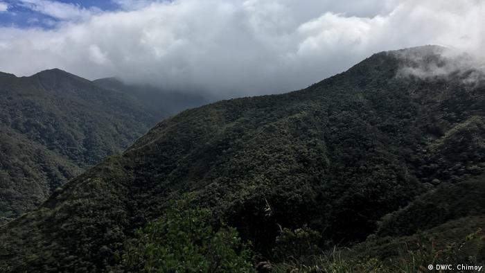 BG Humboldt - Podocarpus NationalPark, Ecuador (DW/C. Chimoy)