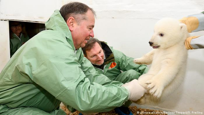 Veterinarians examine the baby polar bear (picture-alliance/Berliner Tierpark/S. Freiling)