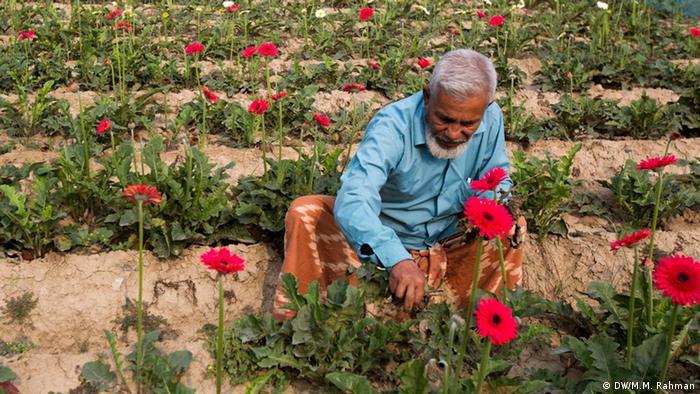 Bangladesch Blumenzucht in Jessore (DW/M.M. Rahman)