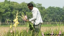 Bangladesch Blumenzucht in Jessore
