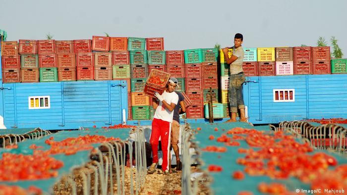 Tunesien - Tomaten vor dem Export (Imago/C. Mahjoub)