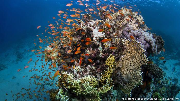 Peixes nadam na Grande Barreira de corais na Austrália.