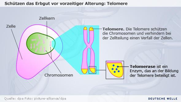 Infografik zum Thema Nobelpreis Medizin 2009 (NEU!)