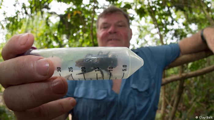Ein Mann hält eine Plastikröhre in der sich eine 3,8 cm großen Wallace-Riesenbiene befindet. Die Insektenart war zuvor seit 38 Jahren nicht mehr gesichtet worden.