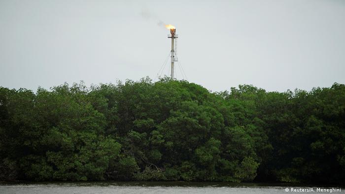 Flamme über Mangrovenwald (Foto: Reuters/A. Meneghini )