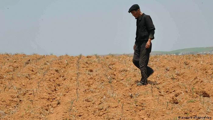 Farmland hit by drought in North Korea