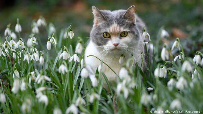 Un gato entre flores.