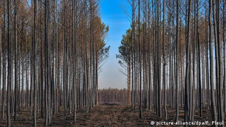A forest southwest of Berlin six months after a wildfire