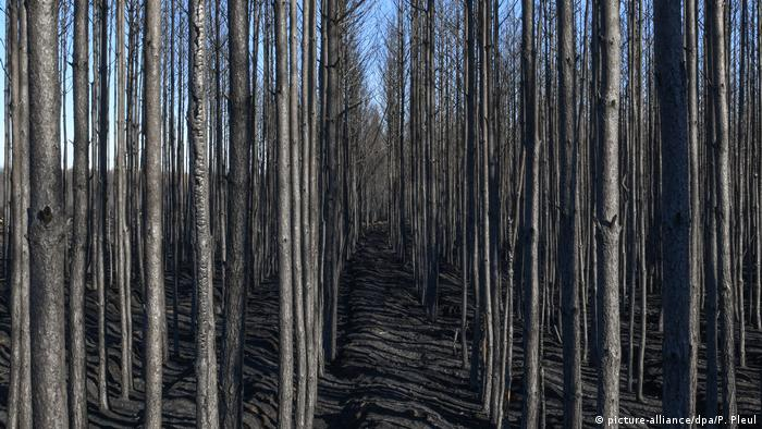 Post forest fire in a forest near Treuenbrietzen in Germany