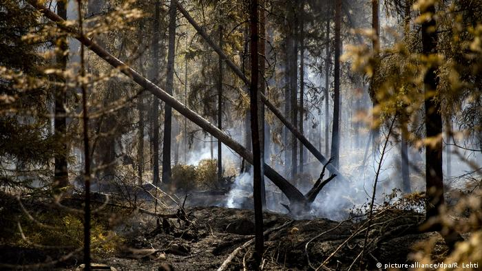 Smoke on the ground and two trees toppling in a forest
