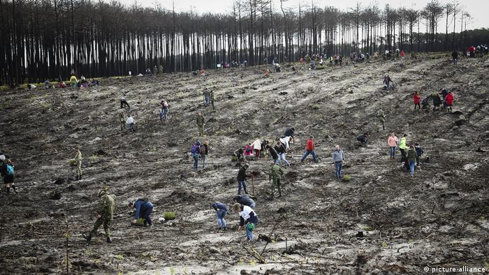 Volunteers regenerating Pinhal de Leiria forest in Portugal