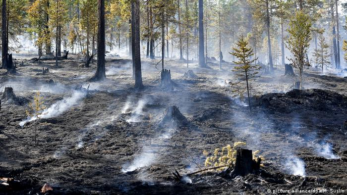 Wildfire forest damage in Sweden