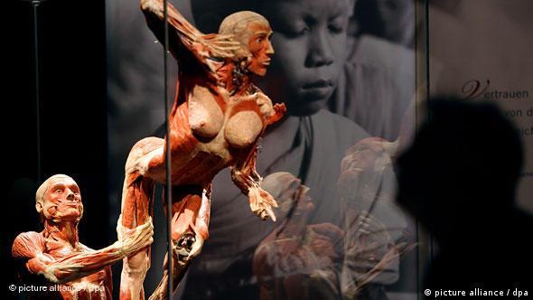 Flashgalerie Körperwelten in Köln