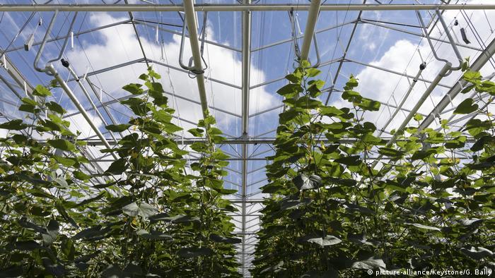 Greenhouse in full bloom