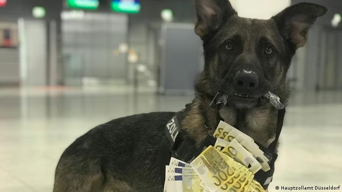 Luke with a bag full of money, wearing his official 'customs' harness (Hauptzollamt Düsseldorf)