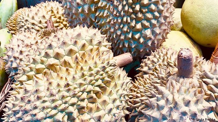Durian, Frucht