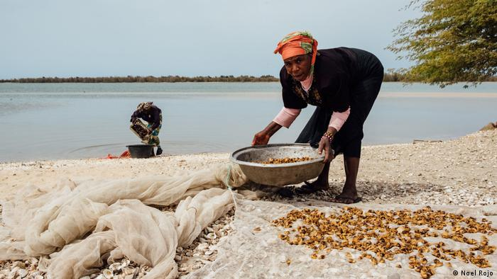 Women collect clams in Senegal