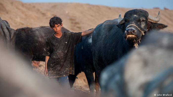 A boy stares at the camera and puts his hand on the back of a large, black water buffalo (photo: John Wreford)