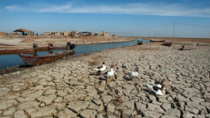 Geese walk across dry, cracked land next to a shallow river. A canoe is on the river and basic structures can be seen in the distance (photo: John Wreford)