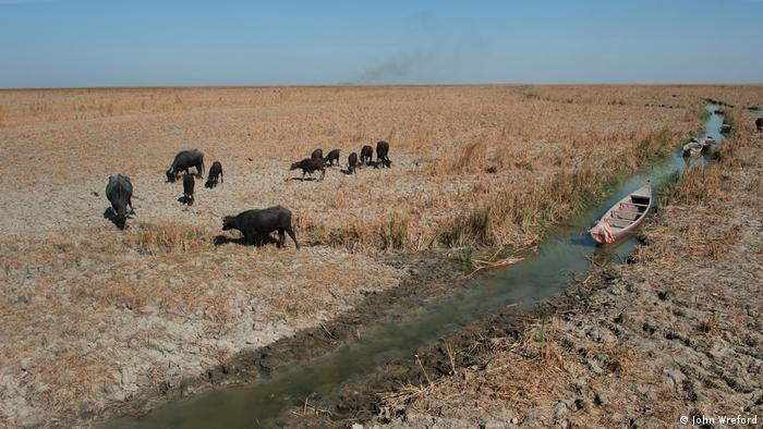 A small herd of buffalo look for food in the dry grass surrounding a narrow and shallow strip of water. An empty canoe is lying in the stream (photo: John Wreford)