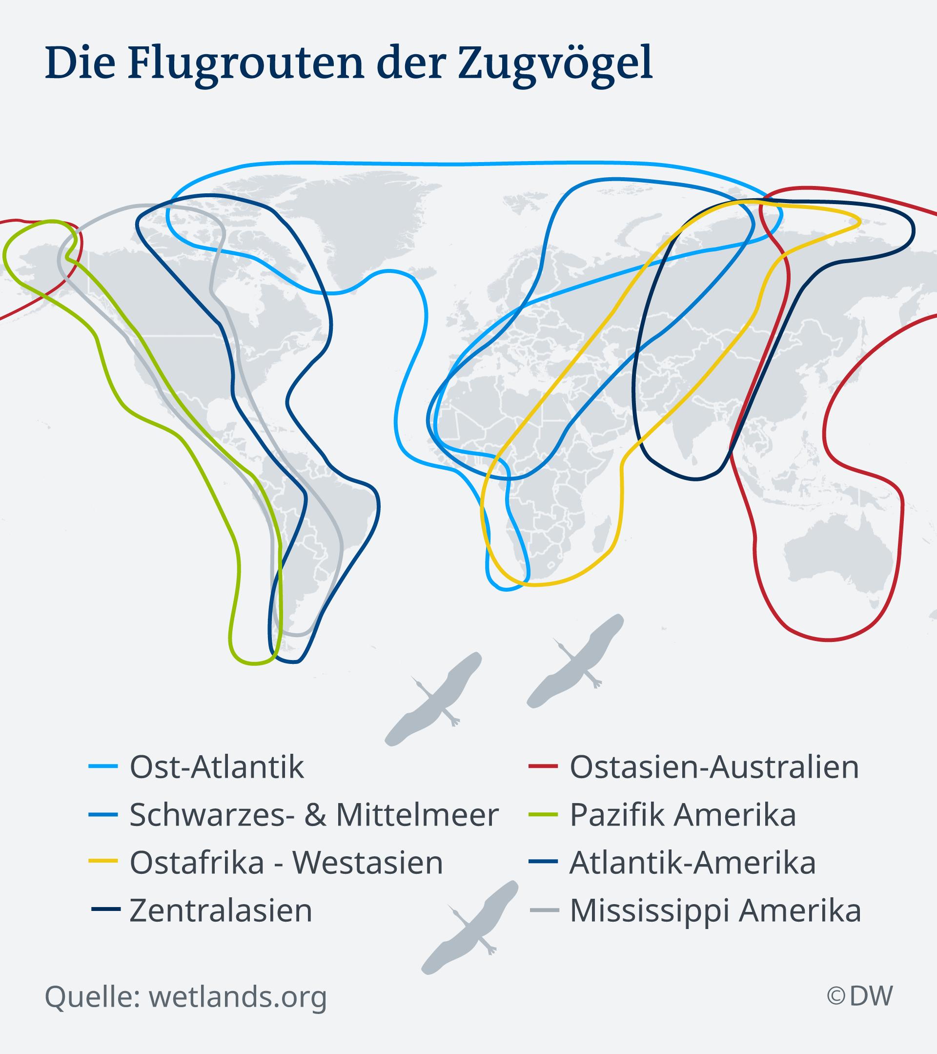 Grafik zu den Flugrouten der Zugvögel