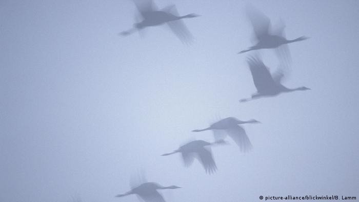 the science of migratory birds