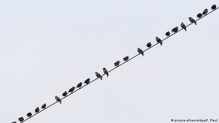 Stare sammeln sich zum Abflug
