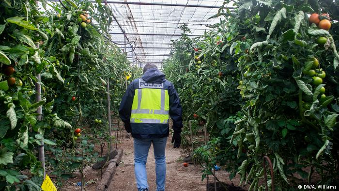 A police officer walks through a greenhouse (DW/A. Williams)