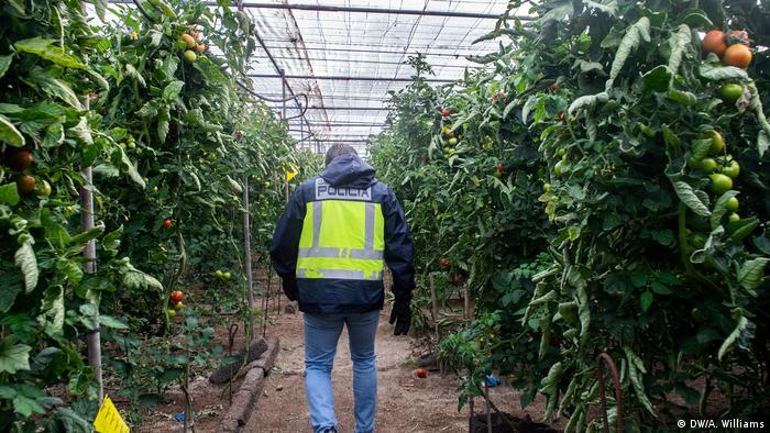 Migranten arbeiten in Spaniens Landwirtschaft