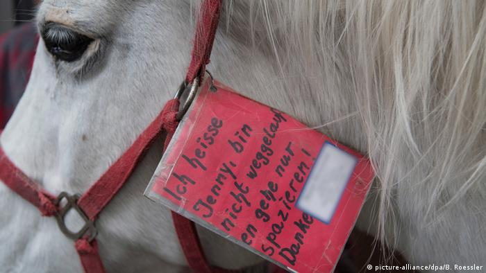 Jenny the horse with tag attached to its bridle (picture-alliance/dpa/B. Roessler)
