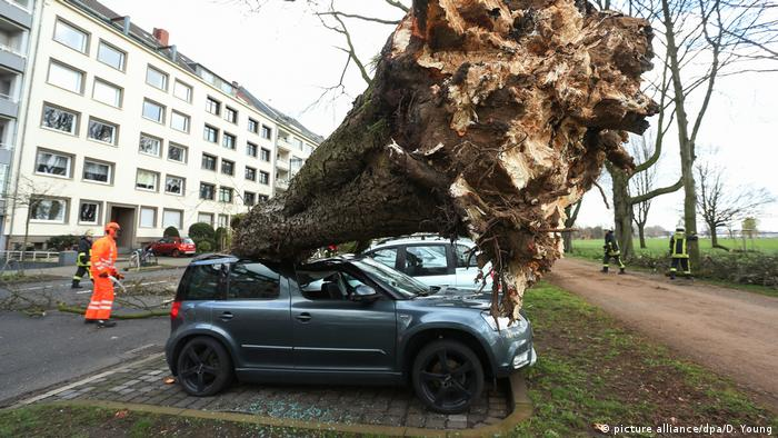Emergency workers work to remove an uprooted tree from cars in Dusseldorf, Germany (picture alliance/dpa/D. Young)