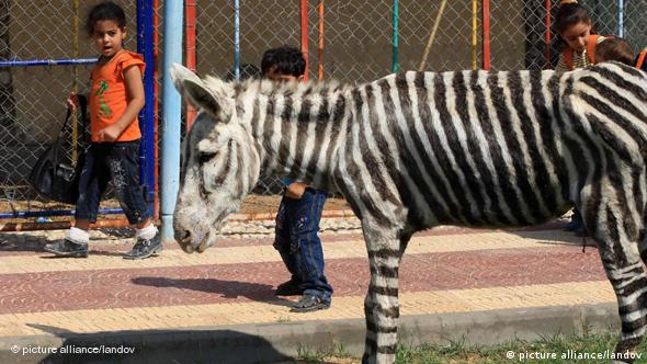 Als Zebra bemalter Esel in einem Zoo in Gaza Flash-Format