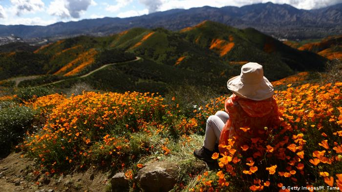 BdTD USA Wildblumen in Kalifornien (Getty Images/M. Tama)