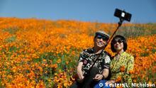 Sepasang pria dan wanita duduk sembari berswafoto dengan tongkat selfie berlatar belakang hamparan bunga poppy oranye