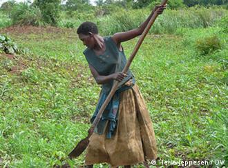 Producción agrícola en Uganda del Norte.