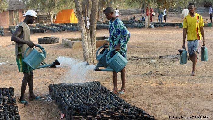 Tree nursery in Senegal