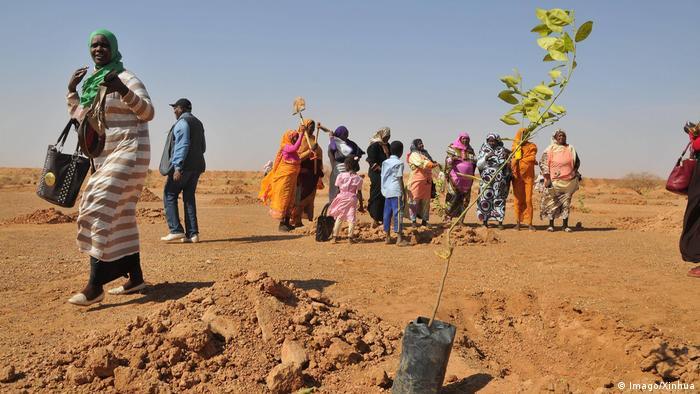 People plant trees on the outskirts of Khartoum, Sudan