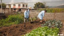 Ecuador Stadtgarten / DW Urban Farming - in Quito ernähren die Erzeugnisse aus 4000 Gärten tausende arme Menschen.