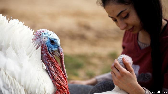 Israel Freedom Farm   Pflege für verletzte Tiere & Tiere mit Behinderung in Moshav Olesh (Reuters/N. Elias)